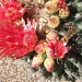 Cactus Flower by kerristephens
