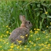 On watership down by rosiekind
