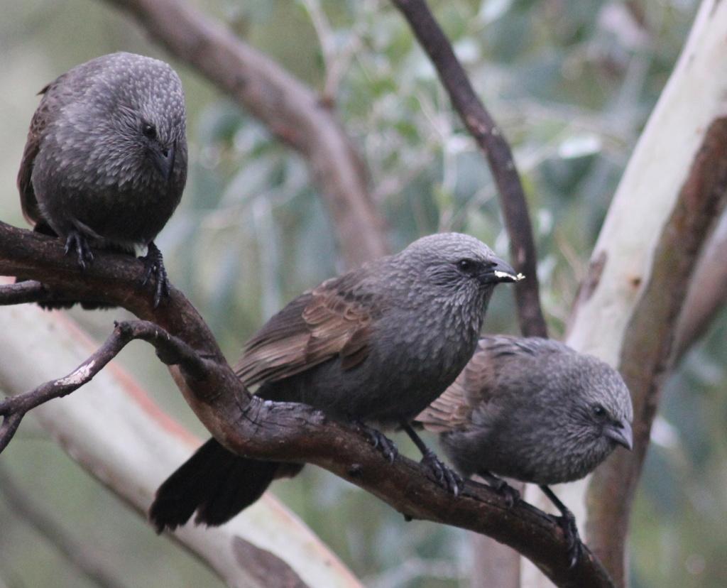 Threesome by landownunder