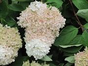 21st Aug 2010 - flowers