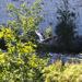 Heron in flight. by bizziebeeme