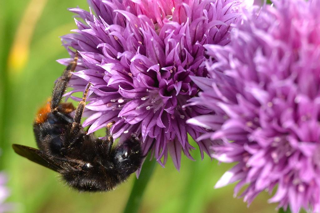 Bee by richardcreese