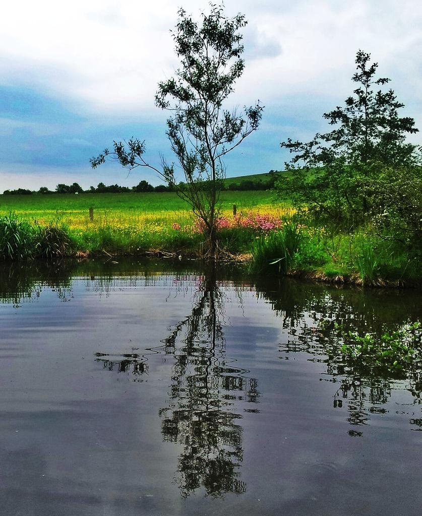 Pond Dipping by jesperani
