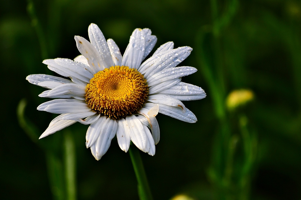 Daisy and Dew by soboy5