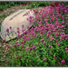 Dinghy with Pink Flowers, Shoreham Beach by ivan