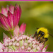 Bee Happy! by nicolaeastwood
