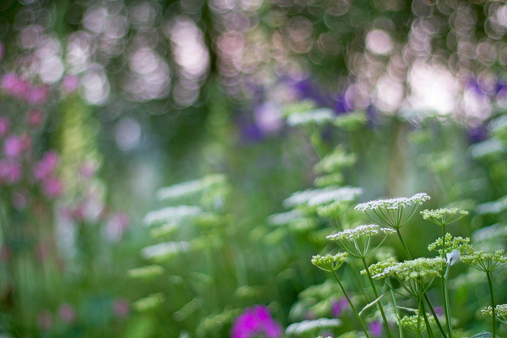 impressions of a woodland garden by jantan