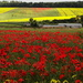 Poppies fore and aft - 25-6 by barrowlane