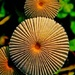 Mushroom Thingy by sbolden