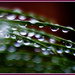 Sunshine and Rain on the Cycad by annied