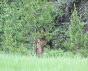 26th Jun 2013 - Hide-n-Go Seek