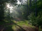 1st Jul 2013 - A Zen Morning