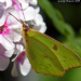 Butterfly on Pink Flower by grannysue