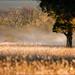 Misty Morning by kazlamont