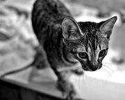 2nd Jul 2013 - Meet the new kitten
