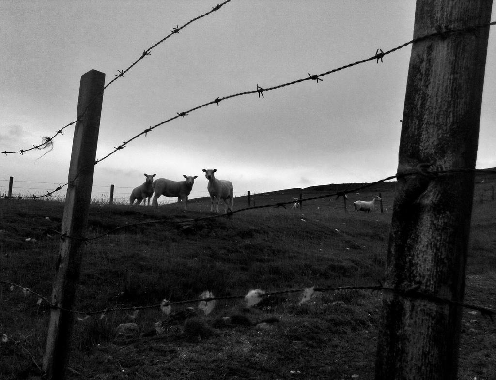 sheep by ingrid2101