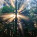 Sun Rays Burst Through the Fog At Lady Bird Johnson Grove by jgpittenger