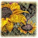Artistic Version Of Our Black Eyed Susans by digitalrn