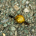 Snail by elisasaeter