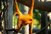 9th Jul 2013 - Just Monkeying Around