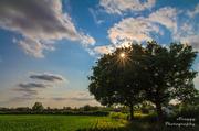 10th Jul 2013 - Day 191 - Tree Sunstar