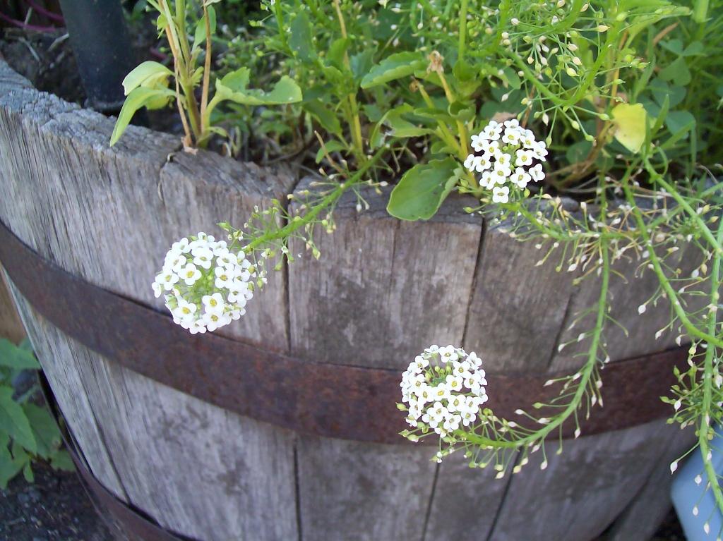 Flowers by julie