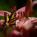 Butterfly Light  by jgpittenger
