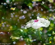 15th Jul 2013 - Flower Drops