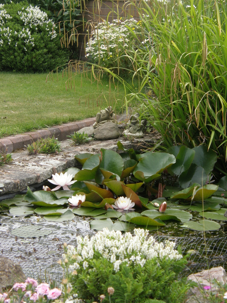 By the Garden pond. by beryl