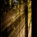 Sun Rays Burst Through Fog by jgpittenger