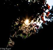 11th Jul 2013 - Rim Light_