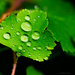 Droplets by elisasaeter