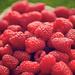 Raspberry Texture by kwind