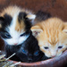 """Three Little Kittens... by aecasey"