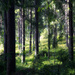 Mythago Wood by joa