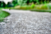 16th Jul 2013 - Being chased by mean horsefly's!! Yikes - Get pushed challenge (something you are afraid of)