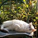 Cat Nap in the Morning Sun by julie