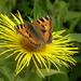 Butterfly by beryl
