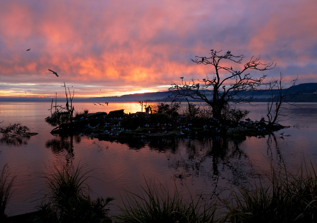 Sunrise at Lake Rotorua by jyokota