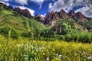 24th Jul 2013 - Mountain Wildflowers