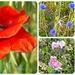 wild flowers by gijsje