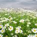 sea flowers by eileenw