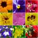 Summertime Sights / Day 30: Summertime Garden. by darrenboyj