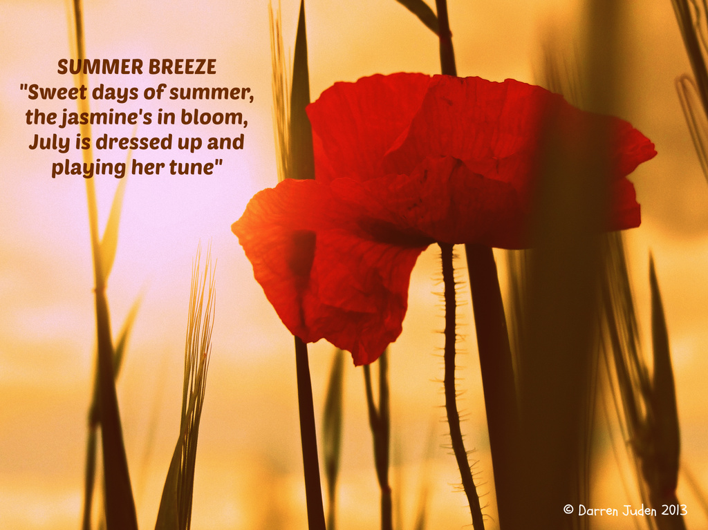 Summertime Sights / Day 31: Summer Breeze. by darrenboyj