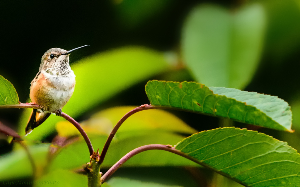 Just Sitting On a Branch  by jgpittenger