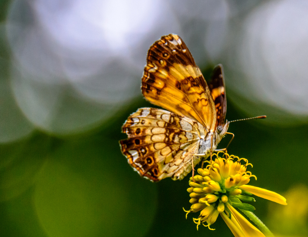 Butterfly in evening light by kathyladley