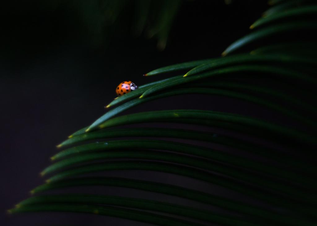 A ladybug steps up by riverlandphotos