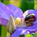 Snail by tonygig