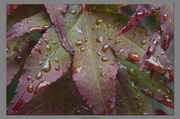 3rd Aug 2013 - The Rain Return