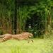 Fly Like a Cheetah by alophoto